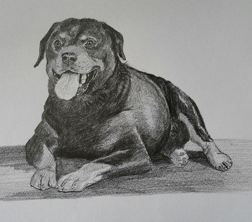 Как рисовать кошек и собак
